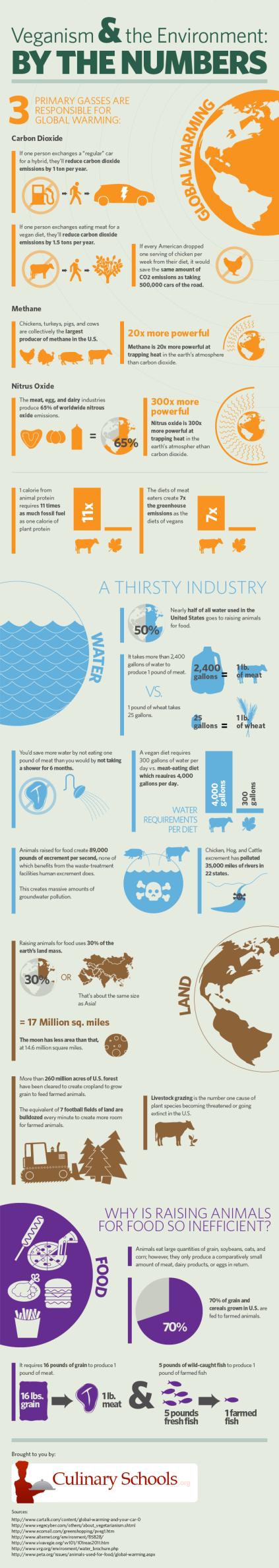veganism-infographic
